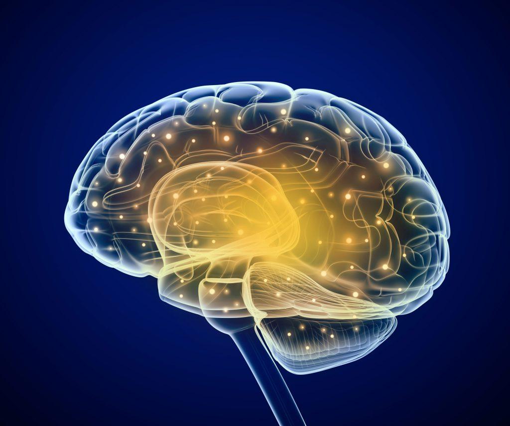 brain supplement neuriva