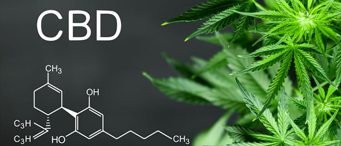 Checking on the Best Cannabis Oil