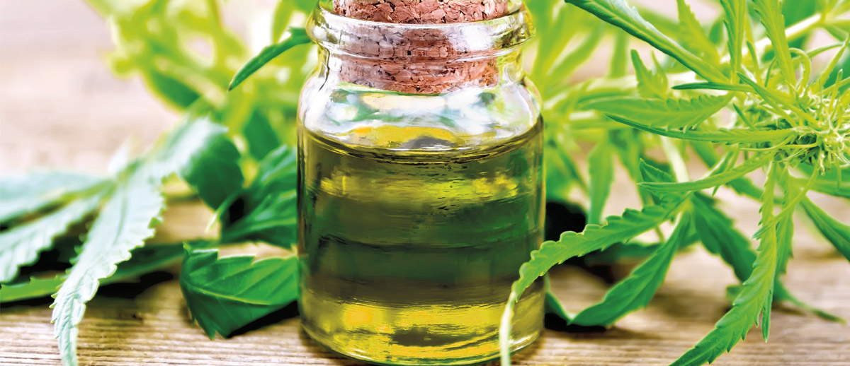 Several processes are involved to extract CBD oil