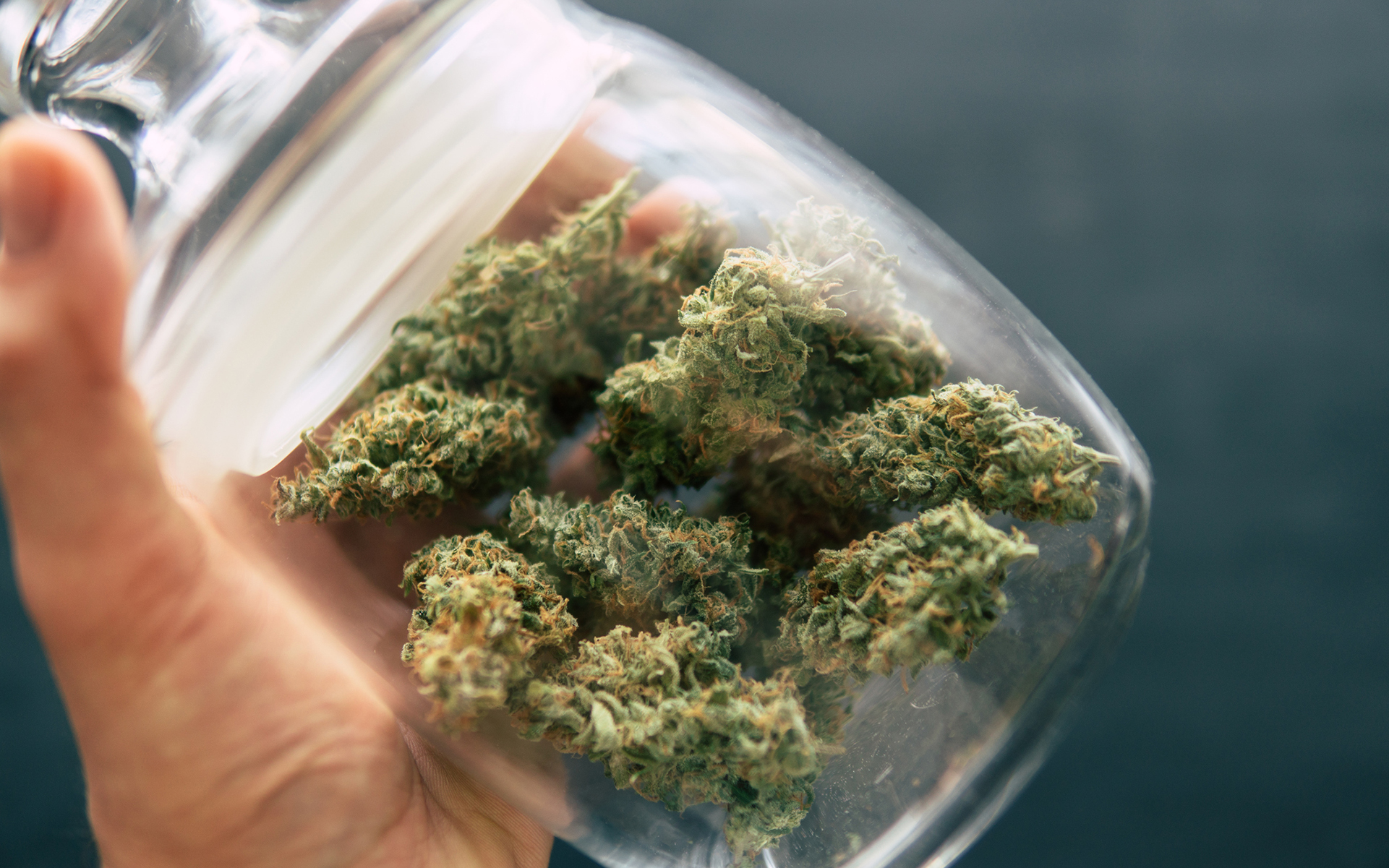 Hybrid Cannabis Strains Online